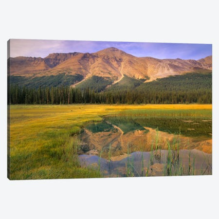 Observation Peak And Coniferous Forest Reflected In Pond, Banff National Park, Alberta, Canada Canvas Print #TFI706} by Tim Fitzharris Canvas Art