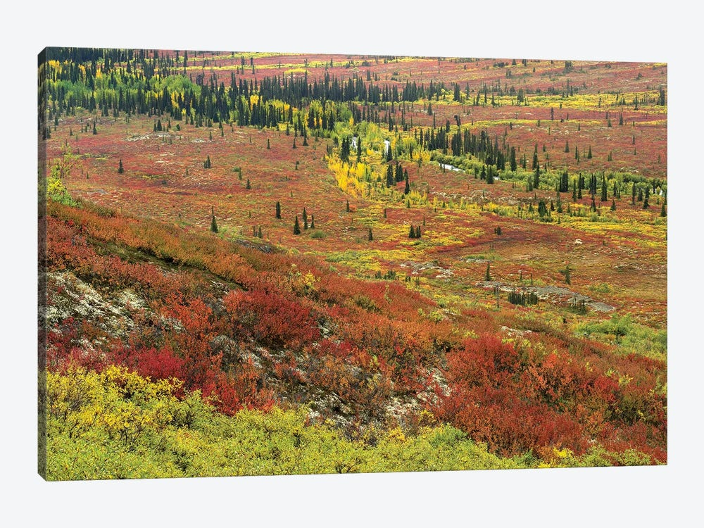 Autumn Tundra With Boreal Forest, Tombstone Territorial Park, Yukon Territory, Canada by Tim Fitzharris 1-piece Art Print