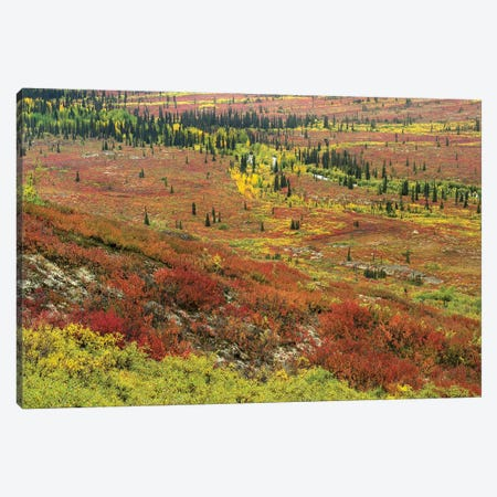 Autumn Tundra With Boreal Forest, Tombstone Territorial Park, Yukon Territory, Canada Canvas Print #TFI70} by Tim Fitzharris Canvas Print