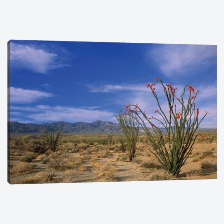 Ocotillo And The Vallecito Mountains, Anza-Borrego Desert State Park, California Canvas Print #TFI712} by Tim Fitzharris Canvas Wall Art