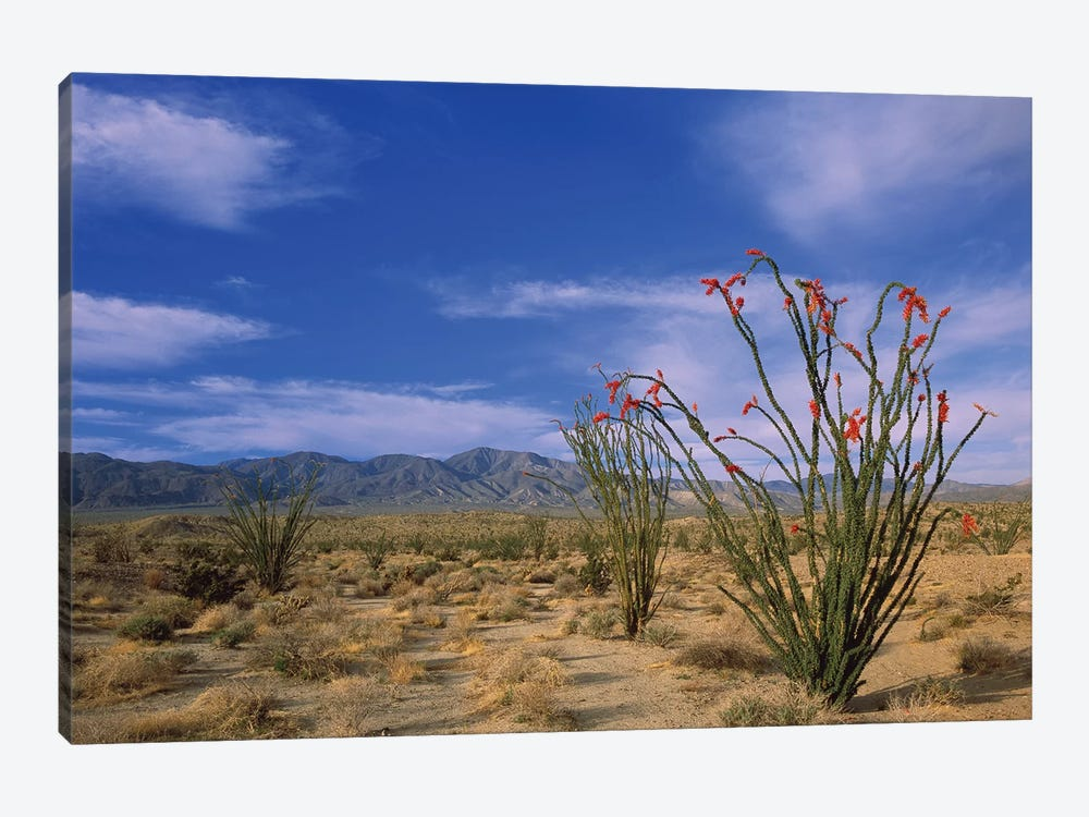 Ocotillo And The Vallecito Mountains, Anza-Borrego Desert State Park, California by Tim Fitzharris 1-piece Canvas Artwork