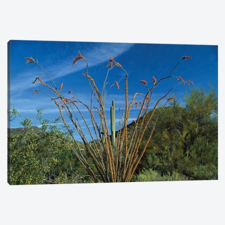 Ocotillo Saguaro And Palo Verde Greasewood Canvas Print #TFI713} by Tim Fitzharris Canvas Artwork