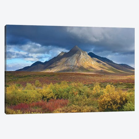 Ogilvie Mountains, Tombstone Territorial Park, Yukon, Canada Canvas Print #TFI716} by Tim Fitzharris Art Print