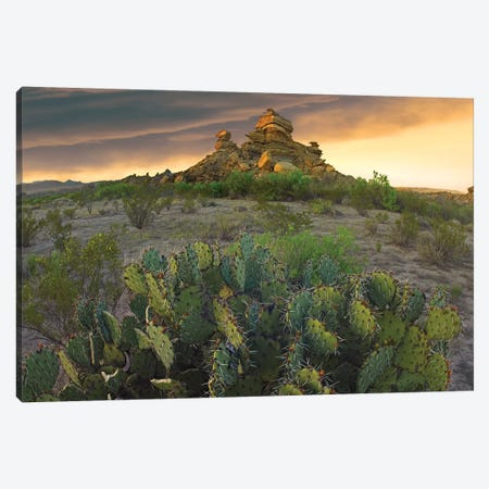 Opuntia And Hoodoos, Big Bend National Park, Chihuahuan Desert, Texas Canvas Print #TFI718} by Tim Fitzharris Canvas Wall Art