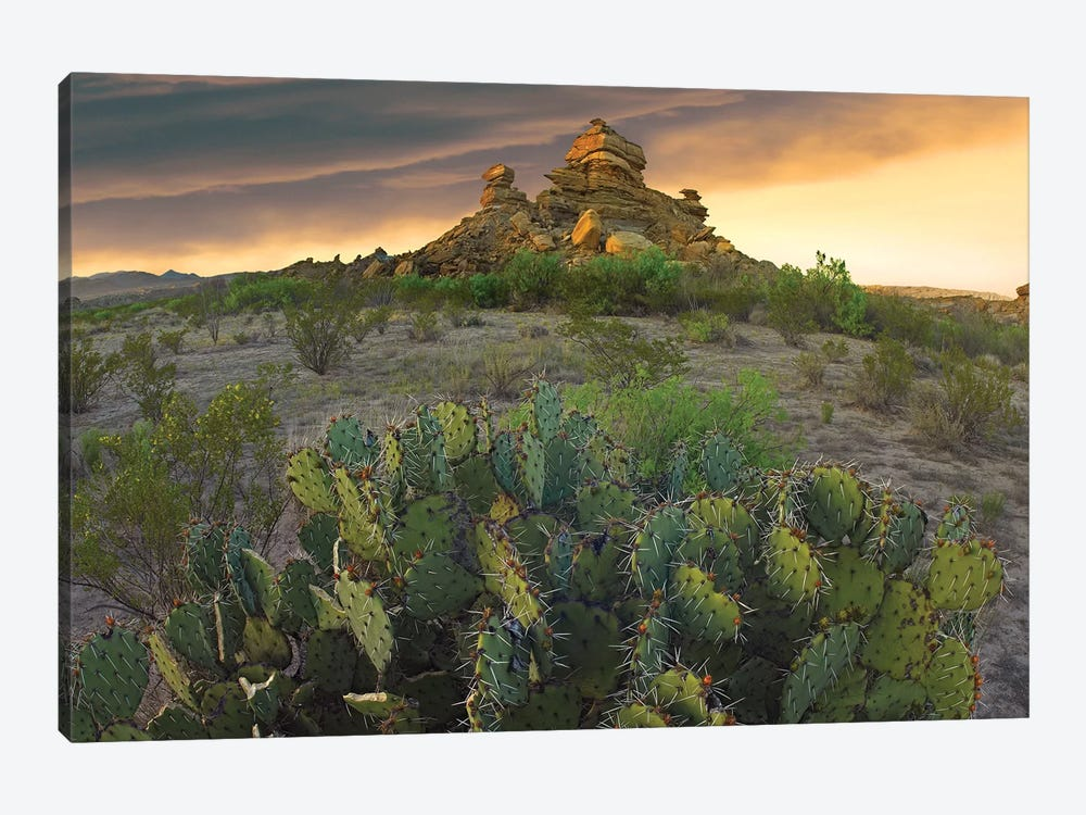 Opuntia And Hoodoos, Big Bend National Park, Chihuahuan Desert, Texas by Tim Fitzharris 1-piece Canvas Artwork