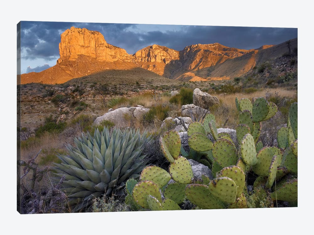 Opuntia Cactus And Agave Near El Capitan, Guadalupe Mountains National Park, Chihuahuan Desert, Texas by Tim Fitzharris 1-piece Canvas Print
