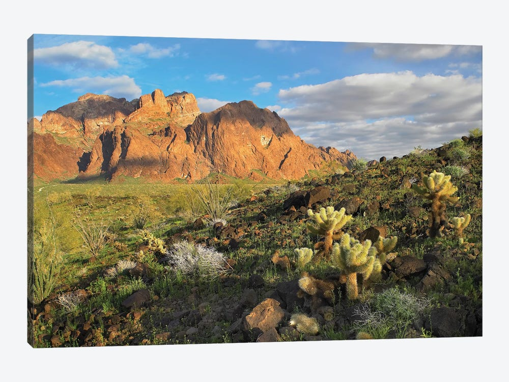 Opuntia Cactus And Other Desert Vegetation, Kofa National Wildlife Refuge, Arizona by Tim Fitzharris 1-piece Art Print
