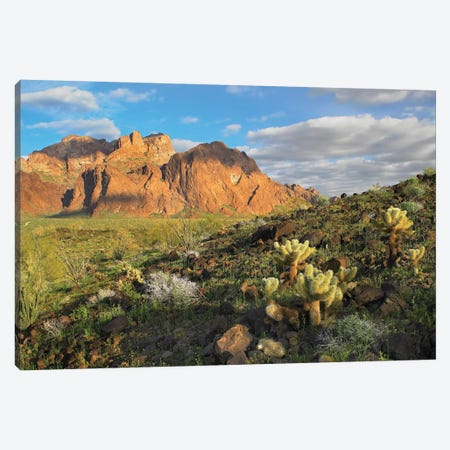 Opuntia Cactus And Other Desert Vegetation, Kofa National Wildlife Refuge, Arizona Canvas Print #TFI720} by Tim Fitzharris Canvas Print
