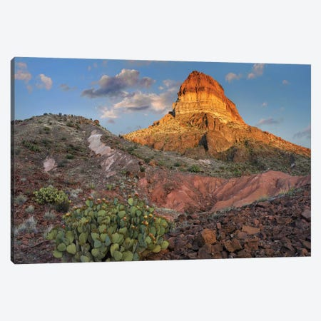Opuntia Cactus At Cerro Castellan, Chihuahuan Desert, Big Bend National Park, Chihuahuan Desert, Texas Canvas Print #TFI721} by Tim Fitzharris Canvas Art Print