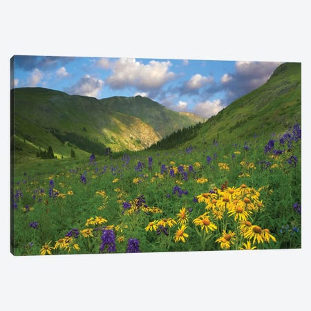 Orange Sneezeweed And Delphinium In American Basin, Colorado - Horizontal Canvas Print #TFI729} by Tim Fitzharris Canvas Print