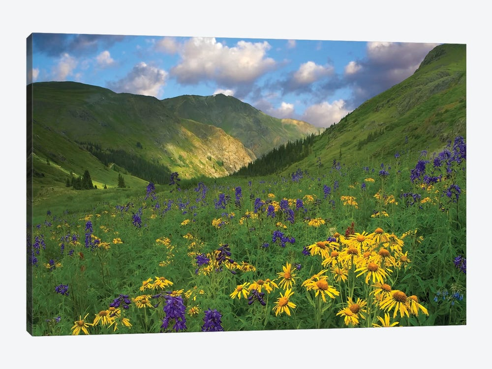 Orange Sneezeweed And Delphinium In American Basin, Colorado - Horizontal by Tim Fitzharris 1-piece Canvas Wall Art