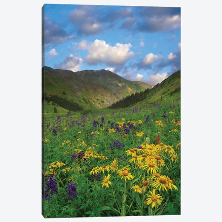 Orange Sneezeweed And Delphinium In American Basin, Colorado - Vertical Canvas Print #TFI730} by Tim Fitzharris Canvas Wall Art