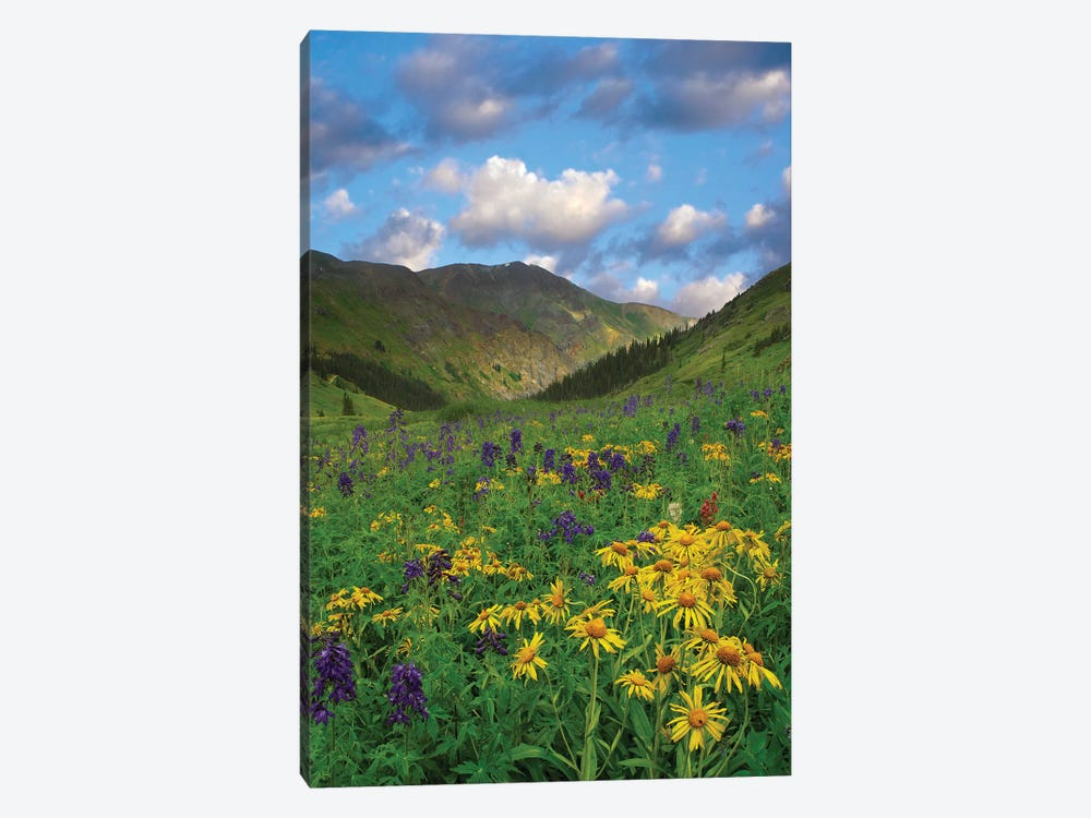 Orange Sneezeweed And Delphinium In American Basin, Colorado - Vertical by Tim Fitzharris 1-piece Canvas Artwork