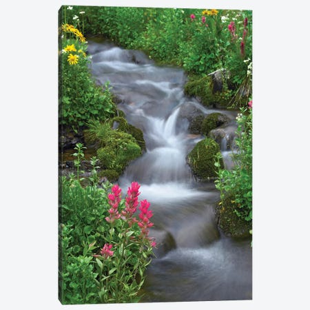 Orange Sneezeweed And Indian Paintbrush Beside Stream, Yankee Boy Basin, Colorado - Vertical Canvas Print #TFI731} by Tim Fitzharris Canvas Wall Art
