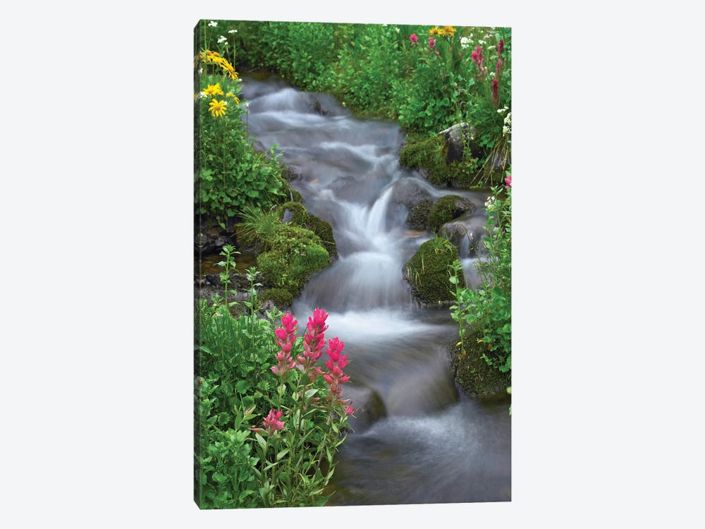 Orange Sneezeweed And Indian Paintbrush Beside Stream, Yankee Boy Basin, Colorado - Vertical by Tim Fitzharris 1-piece Art Print