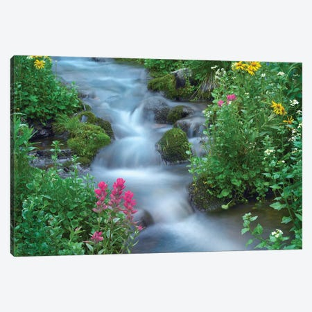 Orange Sneezeweed And Indian Paintbrush Beside Stream, Yankee Boy Basin, Colorado - Horizontal Canvas Print #TFI732} by Tim Fitzharris Canvas Wall Art