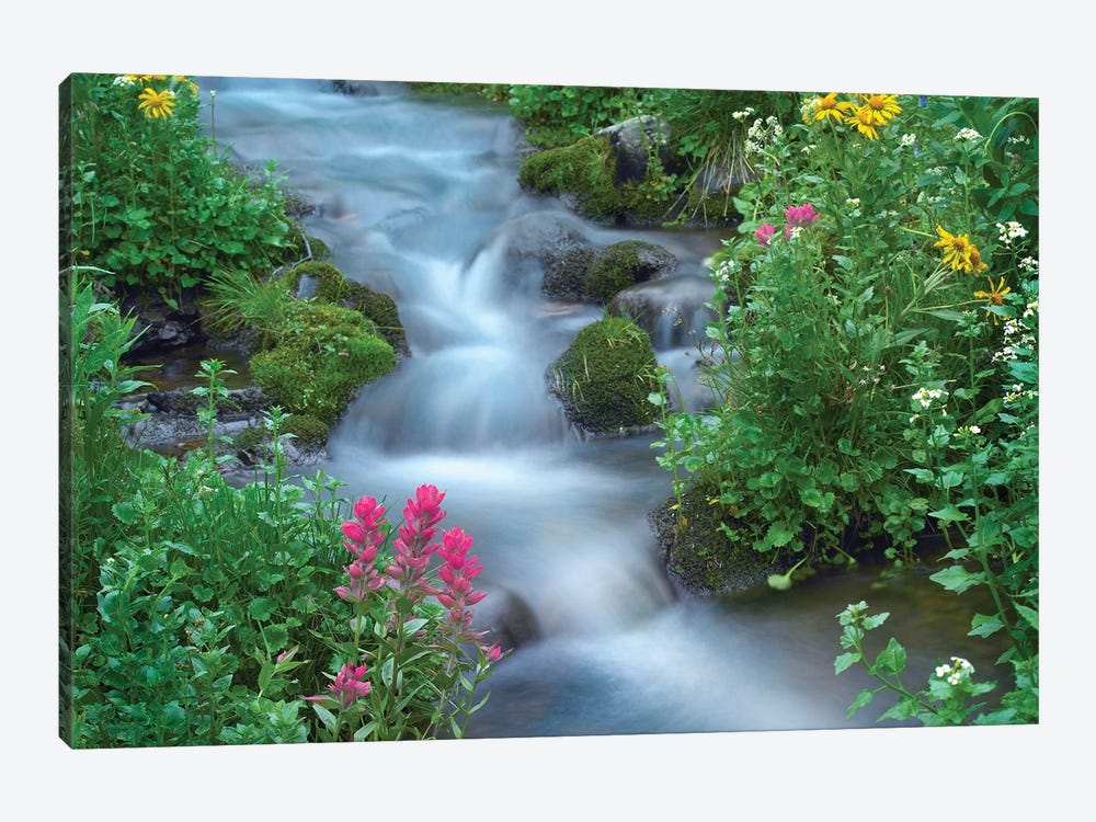 Orange Sneezeweed And Indian Paintbrush Beside Stream, Yankee Boy Basin, Colorado - Horizontal by Tim Fitzharris 1-piece Canvas Art