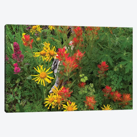 Orange Sneezeweed And Indian Paintbrush Flowers In Meadow, North America Canvas Print #TFI733} by Tim Fitzharris Canvas Art