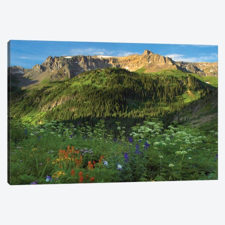 Orange Sneezeweed And Indian Paintbrush Wildflower Meadow Looking Towards Mount Sneffels Wilderness, Yankee Boy Basin, Colorado Canvas Print #TFI734} by Tim Fitzharris Canvas Print