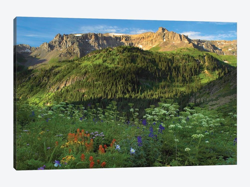 Orange Sneezeweed And Indian Paintbrush Wildflower Meadow Looking Towards Mount Sneffels Wilderness, Yankee Boy Basin, Colorado by Tim Fitzharris 1-piece Canvas Art