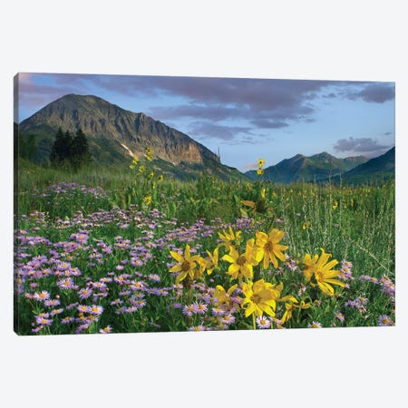Orange Sneezeweed And Smooth Aster Wildflowers In Meadow With Gothic Mountain In Distance, Colorado I Canvas Print #TFI735} by Tim Fitzharris Art Print