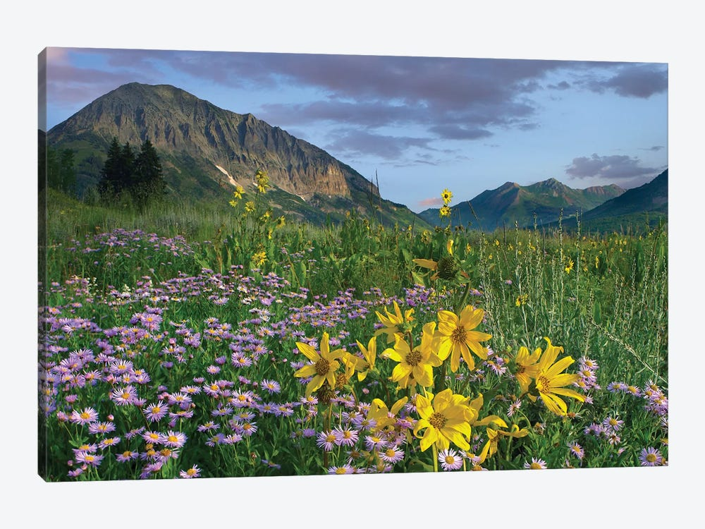 Orange Sneezeweed And Smooth Aster Wildflowers In Meadow With Gothic Mountain In Distance, Colorado I by Tim Fitzharris 1-piece Art Print