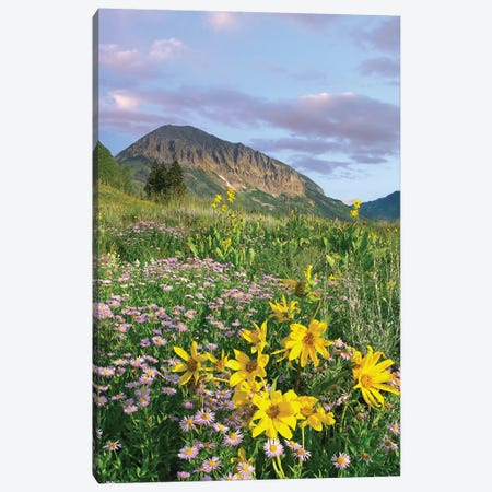Orange Sneezeweed And Smooth Aster Wildflowers In Meadow With Gothic Mountain In Distance, Colorado II Canvas Print #TFI736} by Tim Fitzharris Canvas Print