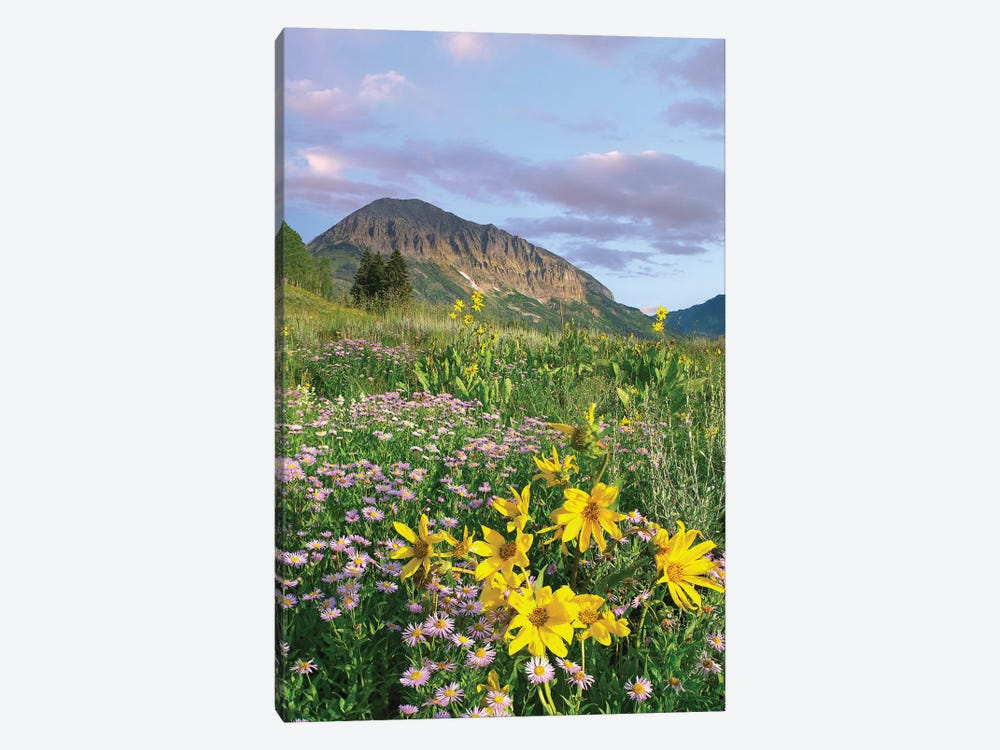 Orange Sneezeweed And Smooth Aster Wildflowers In Meadow With Gothic Mountain In Distance, Colorado II by Tim Fitzharris 1-piece Canvas Art