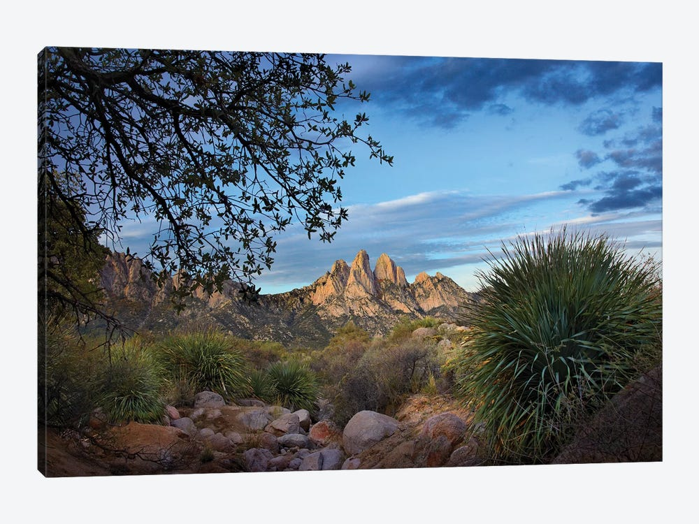 Organ Mountains Near Las Cruces, New Mexico I by Tim Fitzharris 1-piece Art Print