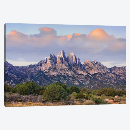 Organ Mountains, Chihuahuan Desert, New Mexico I Canvas Print #TFI741} by Tim Fitzharris Canvas Art Print