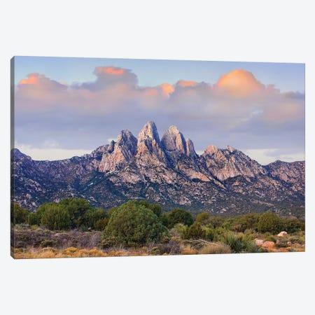 Organ Mountains, Chihuahuan Desert, New Mexico I Canvas Print #TFI741} by Tim Fitzharris Canvas Art Print