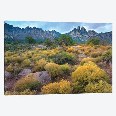 Organ Mountains, Chihuahuan Desert, New Mexico II Canvas Print #TFI742} by Tim Fitzharris Canvas Print