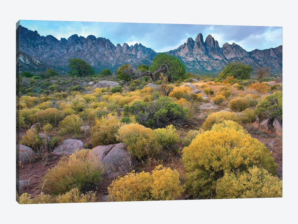 Organ Mountains, Chihuahuan Desert, New Mexico II by Tim Fitzharris 1-piece Canvas Print