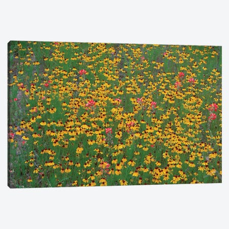 Paintbrush And Coreopsis Meadow, Hill Country, Texas Canvas Print #TFI749} by Tim Fitzharris Canvas Art Print
