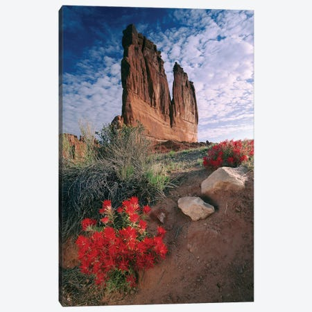 Paintbrush And The Organ Rock, Arches National Park, Utah I Canvas Print #TFI750} by Tim Fitzharris Canvas Art