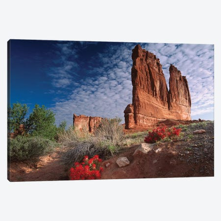 Paintbrush And The Organ Rock, Arches National Park, Utah II Canvas Print #TFI751} by Tim Fitzharris Canvas Art