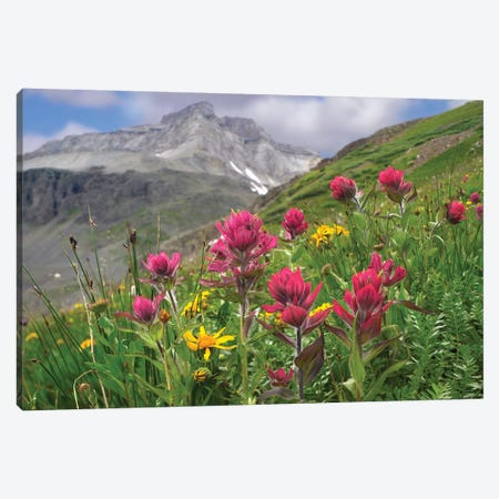 Paintbrush Flowers, Yankee Boy Basin, Colorado Canvas Print #TFI752} by Tim Fitzharris Canvas Art