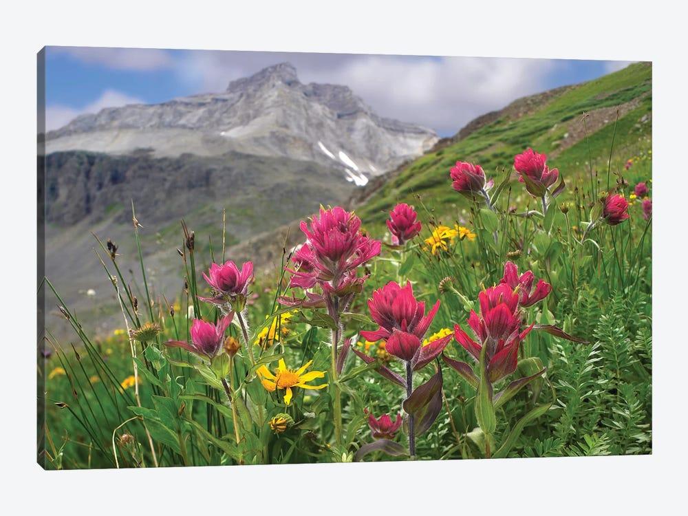 Paintbrush Flowers, Yankee Boy Basin, Colorado by Tim Fitzharris 1-piece Canvas Art