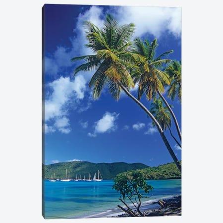 Palm Trees At Maho Bay, Virgin Islands Canvas Print #TFI756} by Tim Fitzharris Art Print