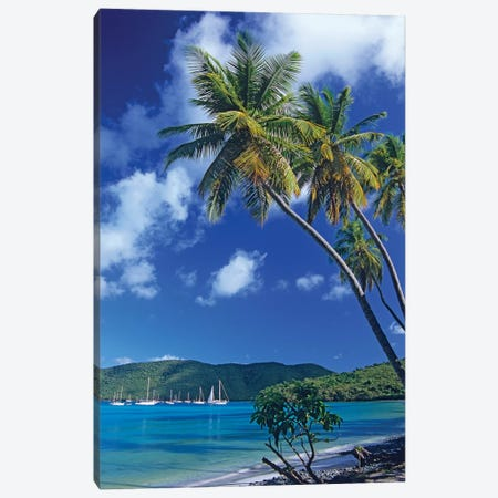Palm Trees At Maho Bay, Virgin Islands Canvas Print #TFI756} by Tim Fitzharris Art Print