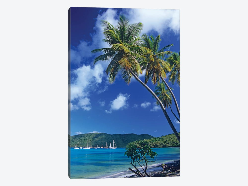 Palm Trees At Maho Bay, Virgin Islands by Tim Fitzharris 1-piece Canvas Art