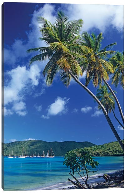 Palm Trees At Maho Bay, Virgin Islands Canvas Art Print