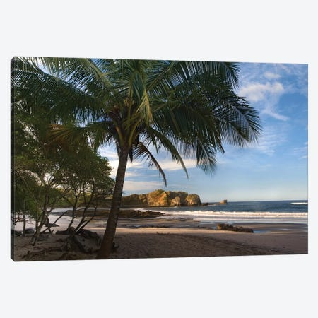 Palm Trees Line Pelada Beach, Costa Rica Canvas Print #TFI757} by Tim Fitzharris Canvas Art Print