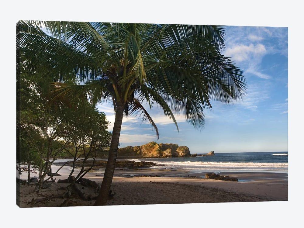 Palm Trees Line Pelada Beach, Costa Rica by Tim Fitzharris 1-piece Canvas Art Print