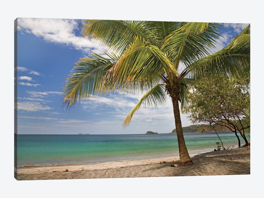 Palm Trees Line Penca Beach, Costa Rica by Tim Fitzharris 1-piece Canvas Art