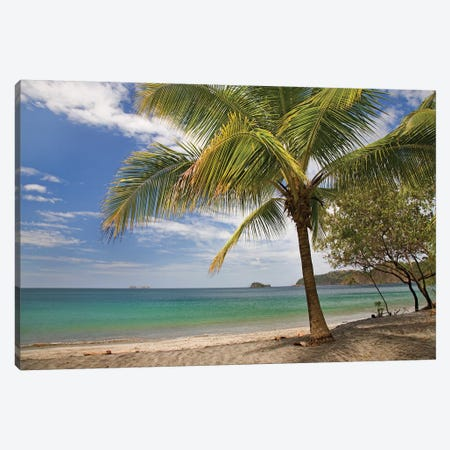 Palm Trees Line Penca Beach, Costa Rica Canvas Print #TFI758} by Tim Fitzharris Canvas Artwork
