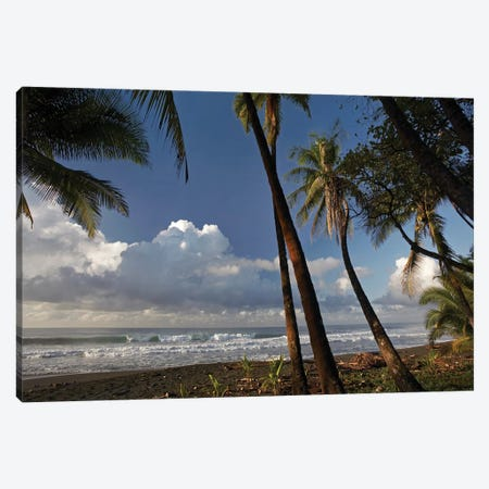 Palm Trees On The Beach Near Marino Ballena National Park, Costa Rica Canvas Print #TFI759} by Tim Fitzharris Canvas Art