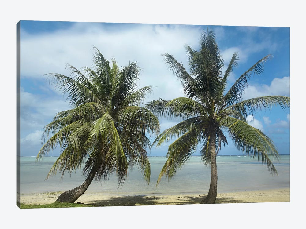 Palm Trees, Agana Beach, Guam by Tim Fitzharris 1-piece Canvas Art Print