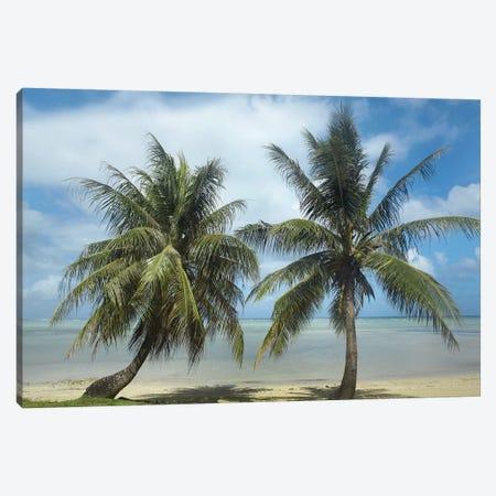 Palm Trees, Agana Beach, Guam Canvas Print #TFI760} by Tim Fitzharris Art Print