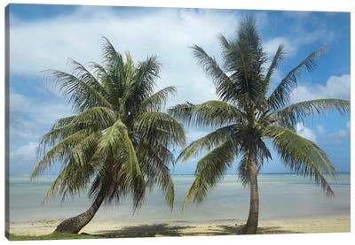 Palm Trees, Agana Beach, Guam Canvas Art Print